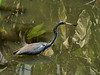 Bird in Water reflection Color 5 by 7