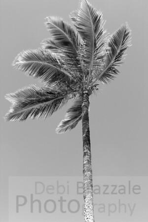 Silver Palm Tree