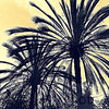 A Study in Palms
