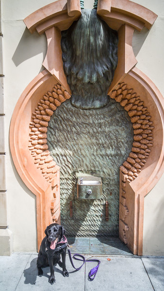 Strange public art at this drinking fountain in Palo Alto, CA