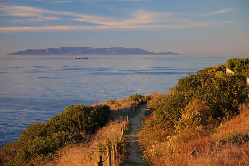The scene at Shoreline Park, 7am on December 12, 2010. That's the upper trail, with Catalina Island and a lone container ship in the background. Shoreline Park, a special place, is home to (as seen in the next few photos) Cactus, Bewick's, and House Wrens,and California and Blue-gray Gnatcatchers, among others.