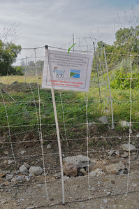 Electric fences added temporarily to contain the grazing Goats.