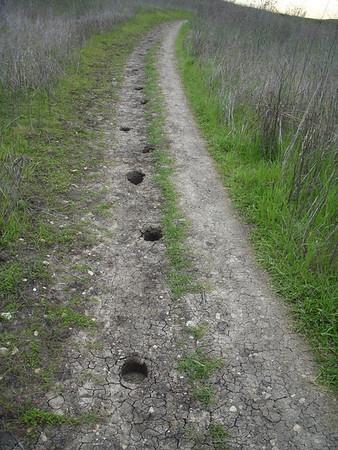 PV Trails 2011
