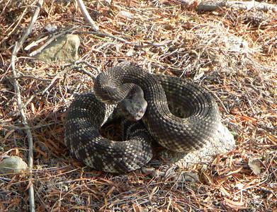 Snakes in PV.