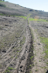 Its possible to walk at the side along here missing most of the mud