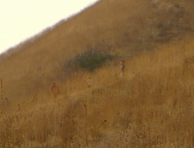 Some walkers take an illegal trail down the ridge.