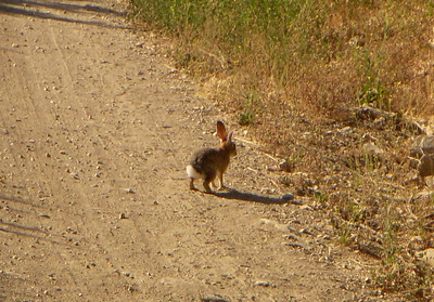 Watch out for Bunnies in and out the trails!