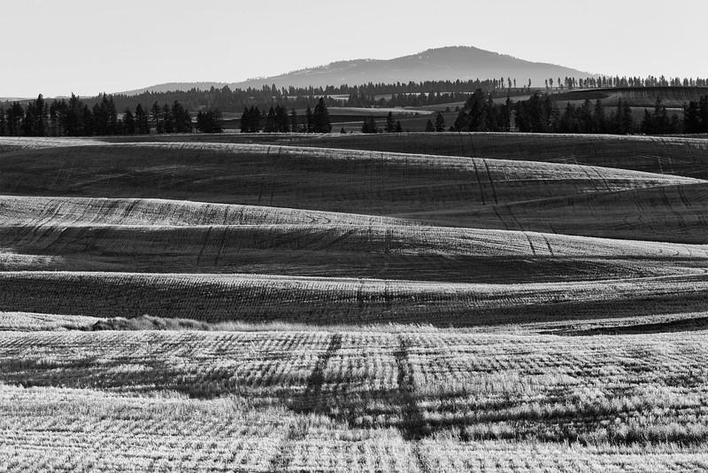Afternoon winter light on the Camas Prairie, Idaho.