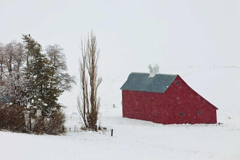 Red Barn in Snowfall