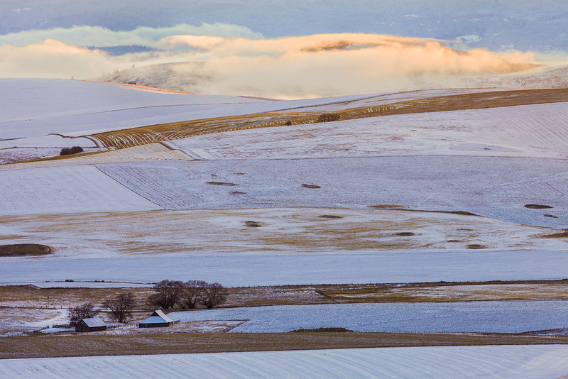 Camas Prairie Layers, Winter