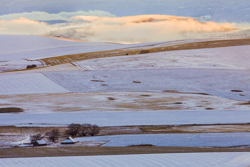 Camas Prairie Layers, Winter