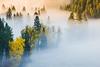 Palouse River Fog