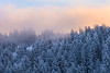 Snow-covered Trees atop Kamiak Butte