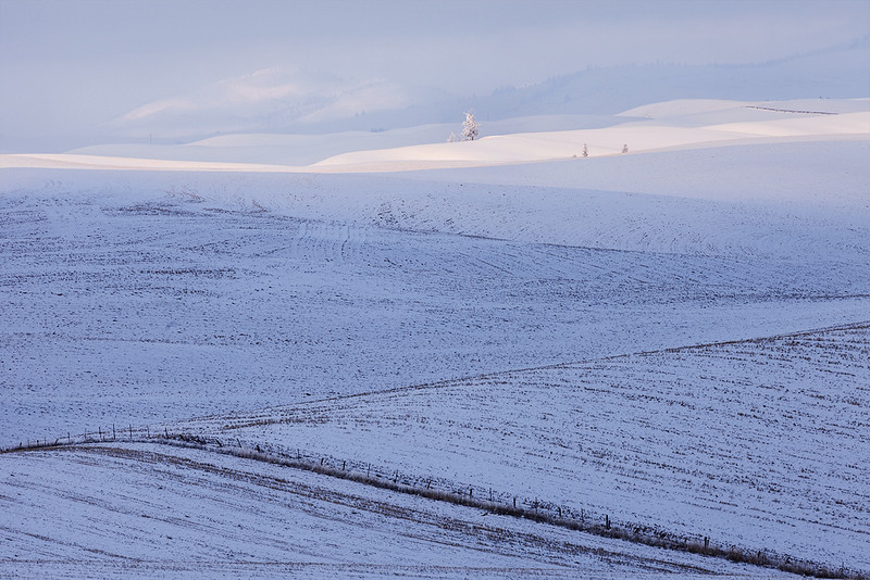 Fenceline and Snowy Hills