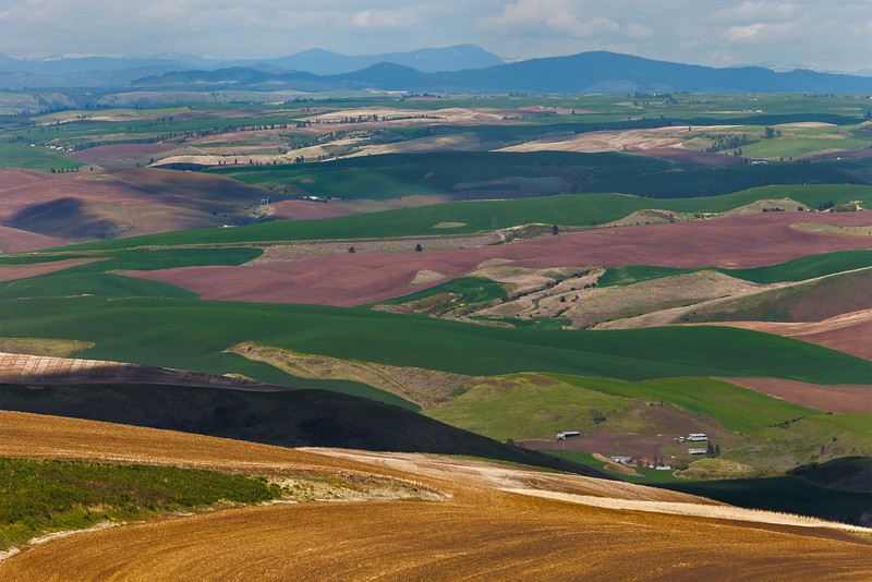 Multitude of Farmland