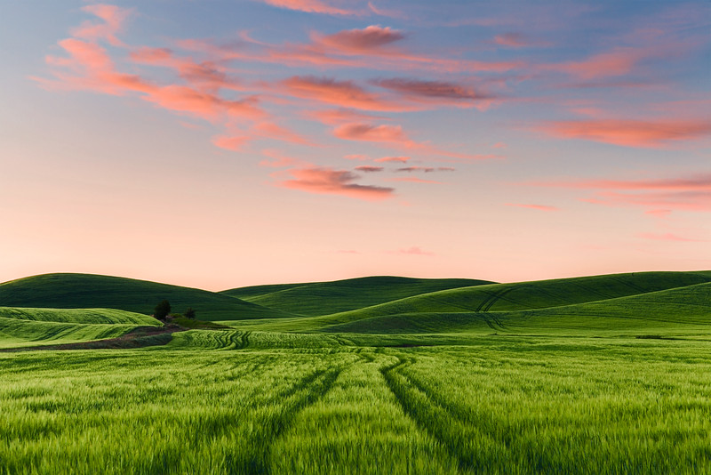 Sunset over Wheat, Summer