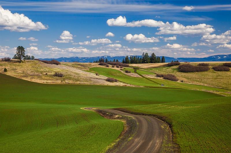 Camas Prairie Field Road