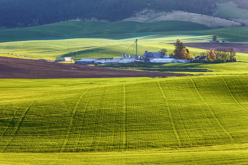 Morning Light Over Idaho Farm