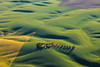 Palouse Spring and Summer :