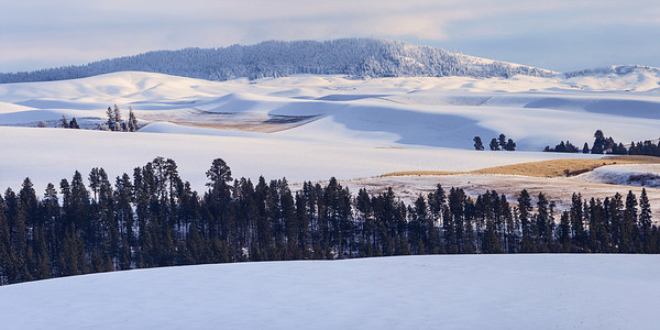 Layered View toward Kamiak Butte, Winter