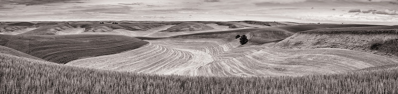 Contours of the Palouse