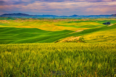 """Serene Beauty,"" the Palouse, Washington"