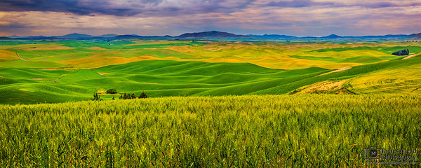 """American Tuscany,"" The Rolling Palouse, Washington"