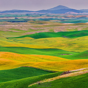 """The Rolling Palouse,"" the Palouse, Washington"