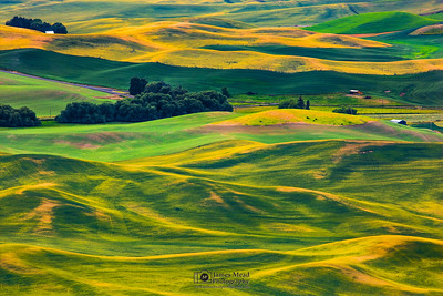 """The Palouse Hills,"" the Palouse, Washington"