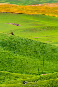 """Spirit Tracks,"" the Palouse, Washington"