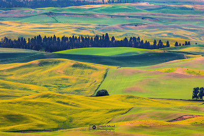 """Rolling Gold,"" the Palouse, Washington"