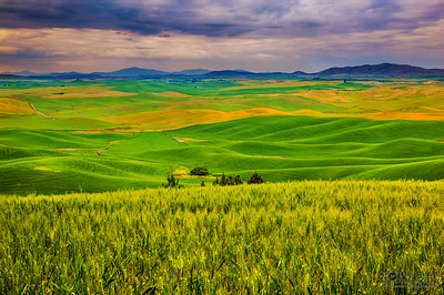 """Rolling Tranquility,"" the Palouse, Washington"