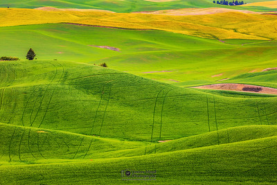 """Rolling Beauty,"" the Palouse, Washington"