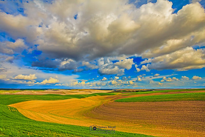 """Golden Roll,"" Rolling Wheat Fields, the Palouse, Washington"