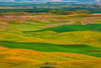 """Waves of Grain,"" the Palouse, Washington"