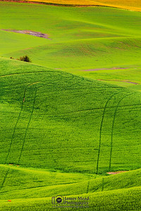 """Ghost Tracks,"" the Palouse, Washington"
