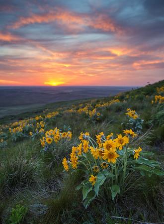 Palouse Wildflowers