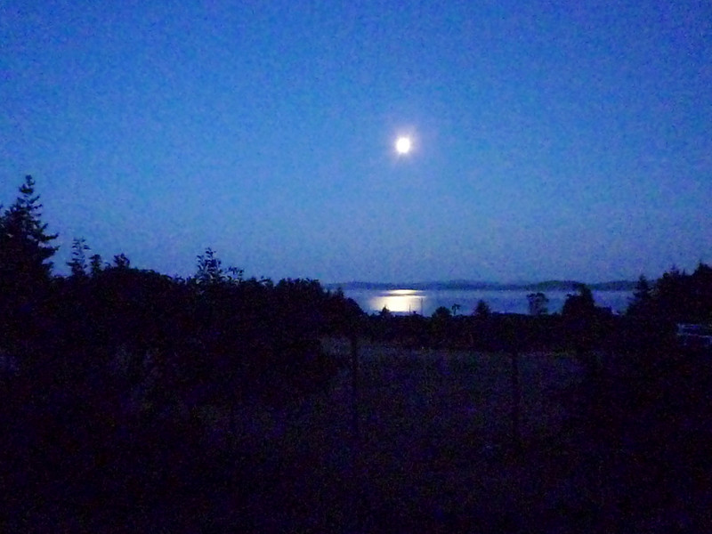 Moon rising over the gorse field