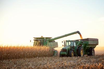 Bowers Corn 2015