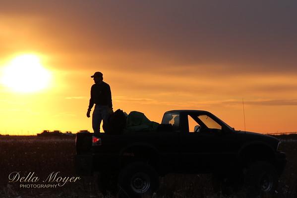Bowers Cotton Harvest
