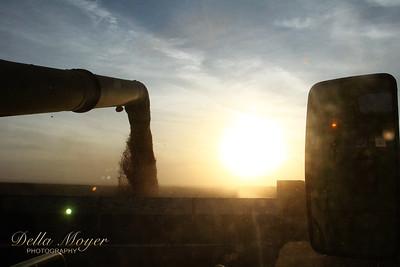Bowers Harvest 2012