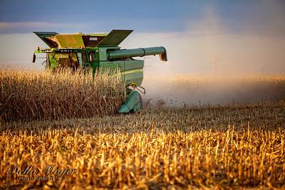 Corn Harvest 2019