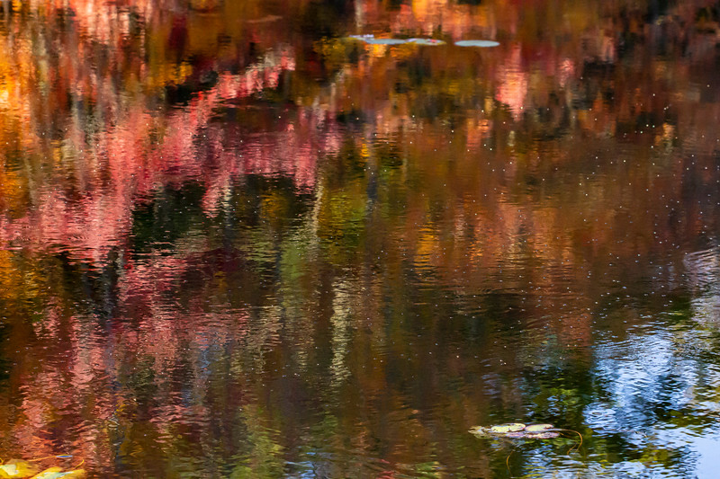 Fall leaves, reflection