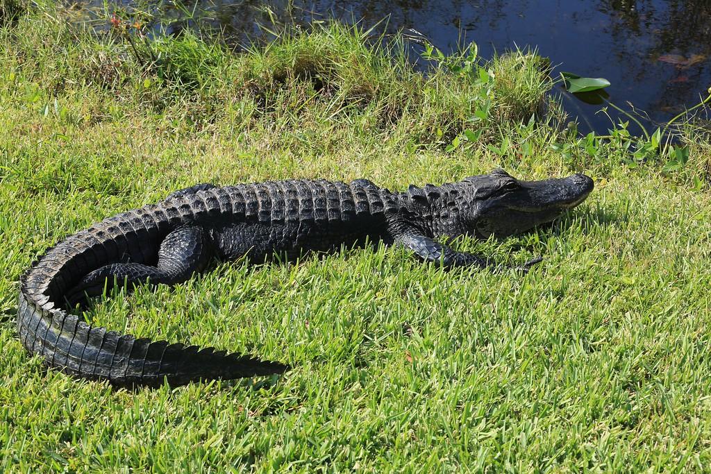 Shark Valley Tram Tour, Everglades National Park
