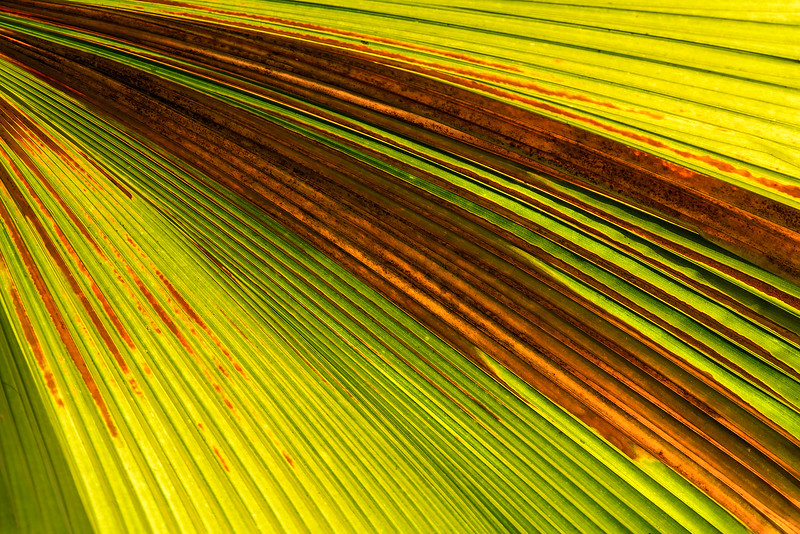 Palm Leaf. Abstract