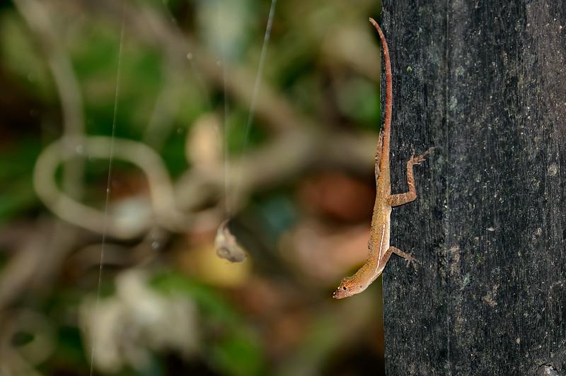 Lizard on a Tree Trunk