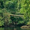 Suspended Bridge in Rain Forest