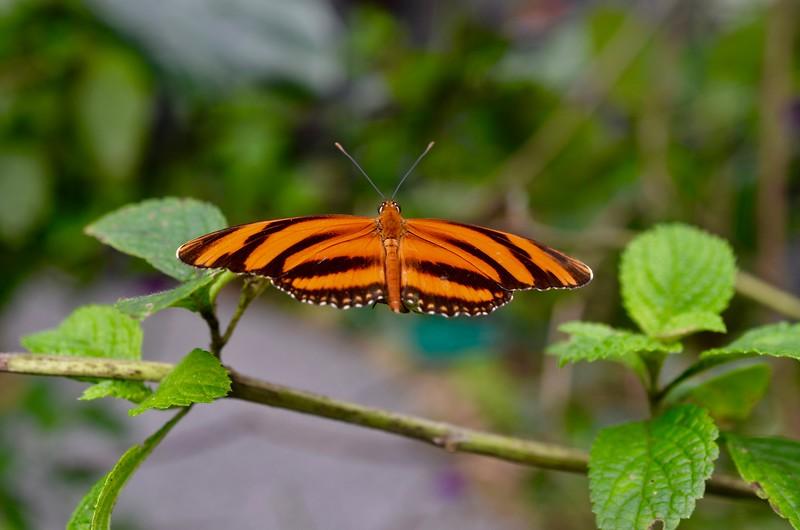Butterfly Haven, El Valle de Anton, Cocle, Panama