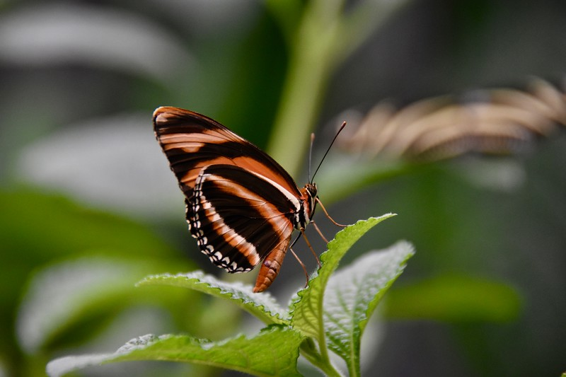 Butterfly Haven, El Valle de Anton, Cocle, Panama