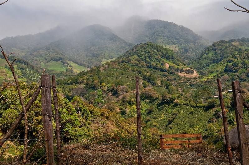 A departing view early in the morning.  Forest dominates above with coffee fields just below at the 5,000 to 6,000 foot level.  Fine mist, call bajareque, passes by.
